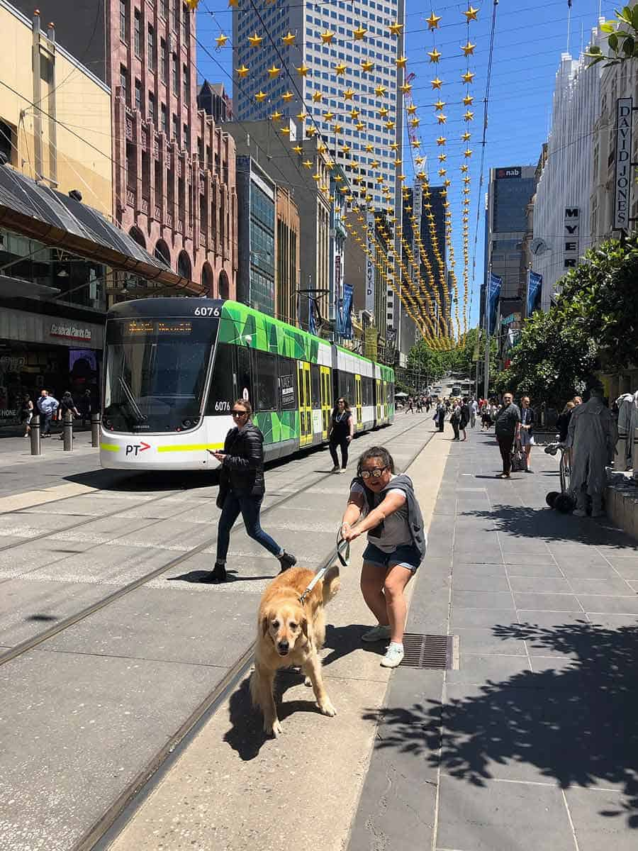 Dozer the golden retriever and Nagi in Melbourne - November 2019