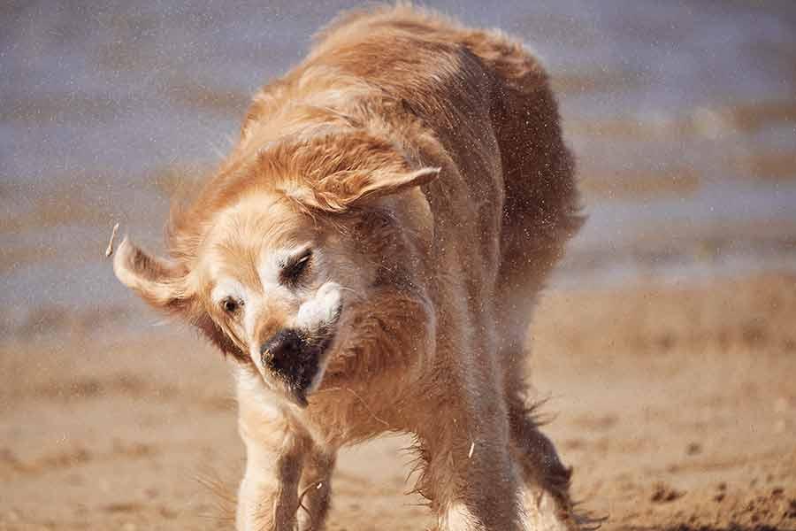 Dozer sacudindo a areia