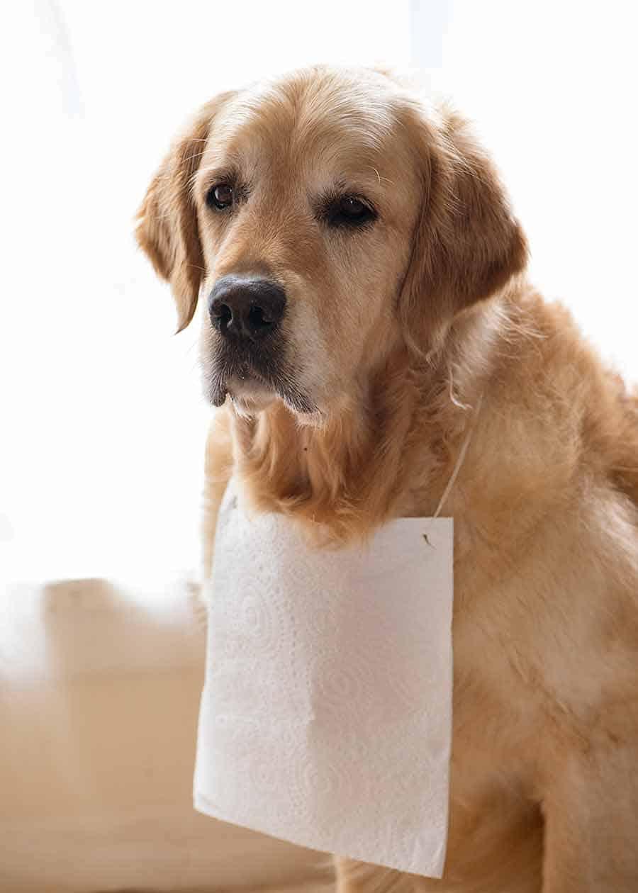 Dozer paper towel bib