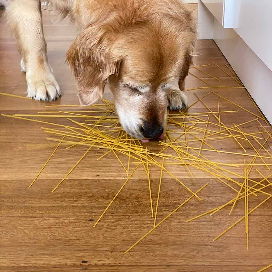 Dozer spaghetti on floor