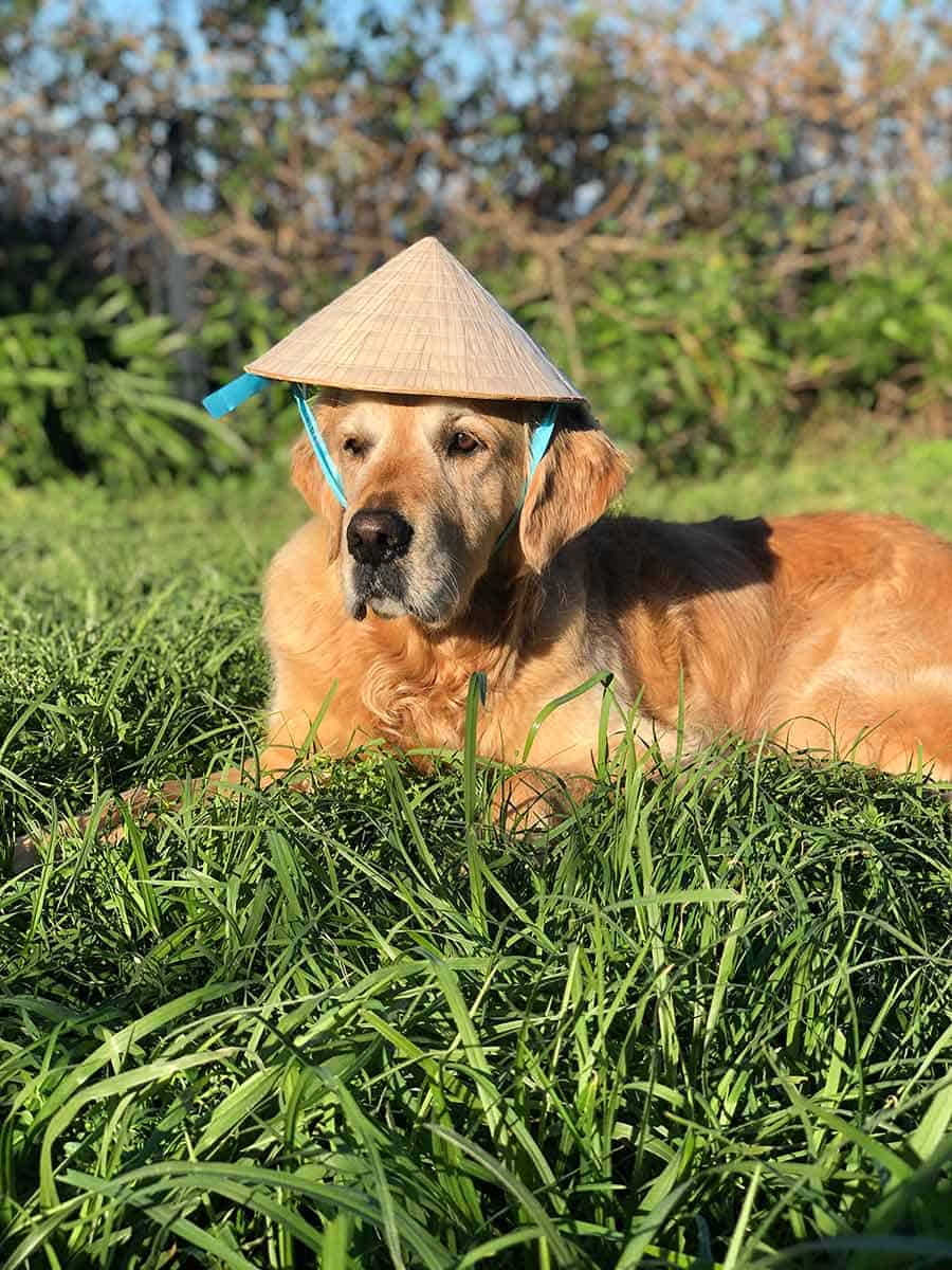 Dozer-with-Vietnamese-hat