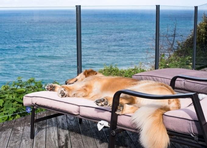 Dozer on Sun Lounge