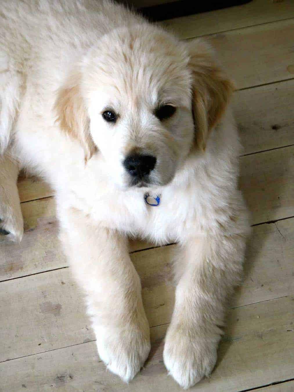 When Dozer was a puppy