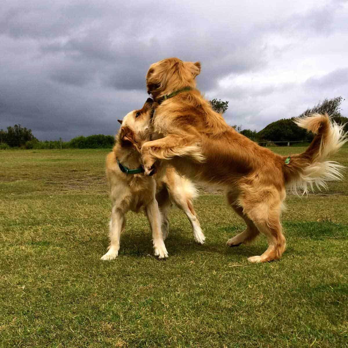 Dozer-and-Ollie