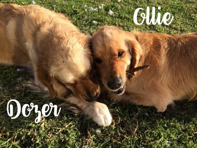 Dozer-and-Ollie-2