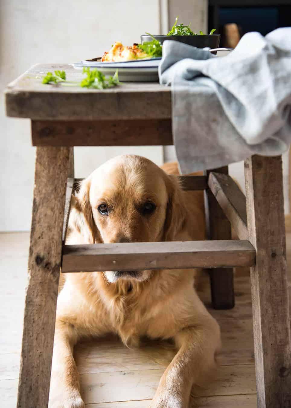 Dozer Squeezing Under Table Cottage Pie