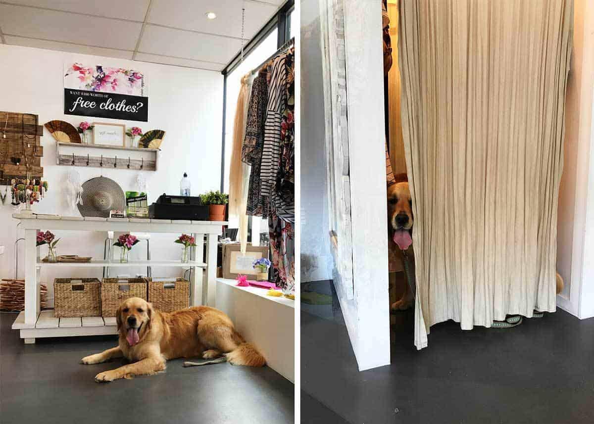 dozer-inside-dress-shop