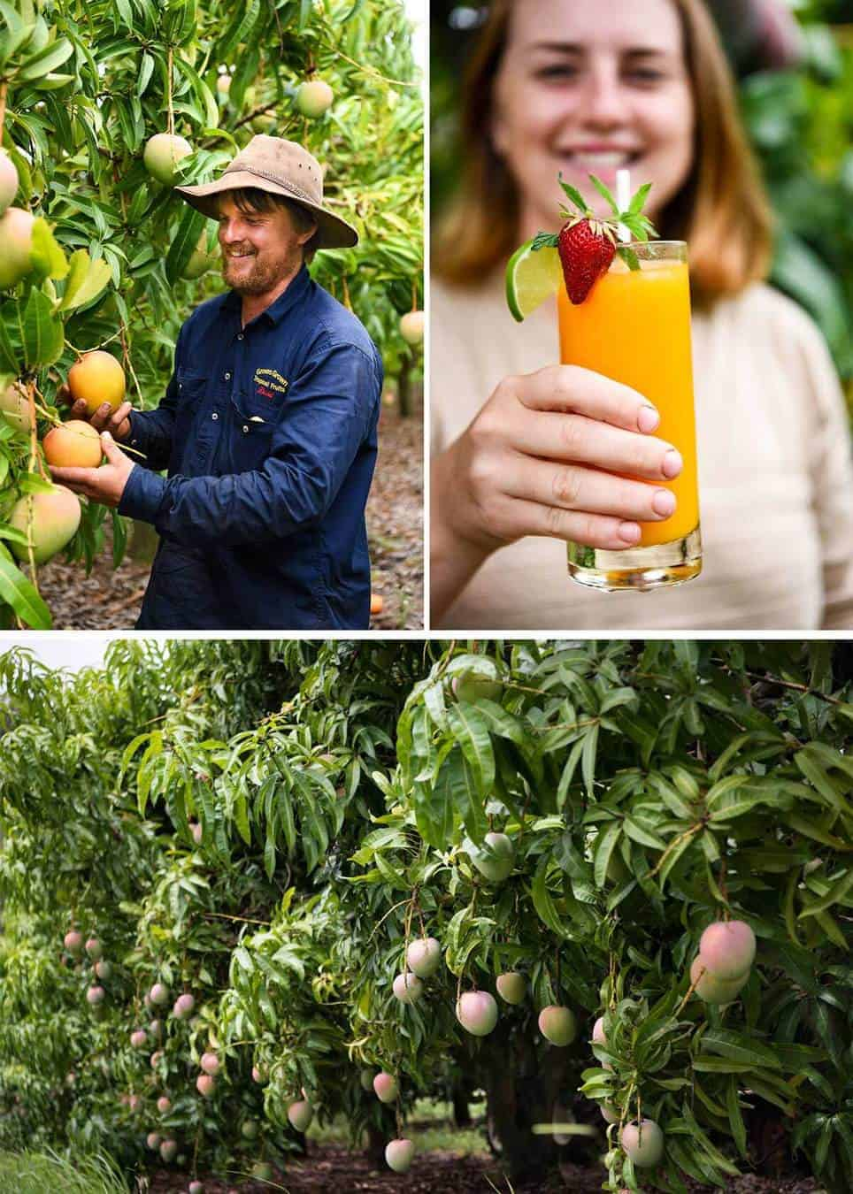 Photos from Groves Mango Farm, Queensland Australia