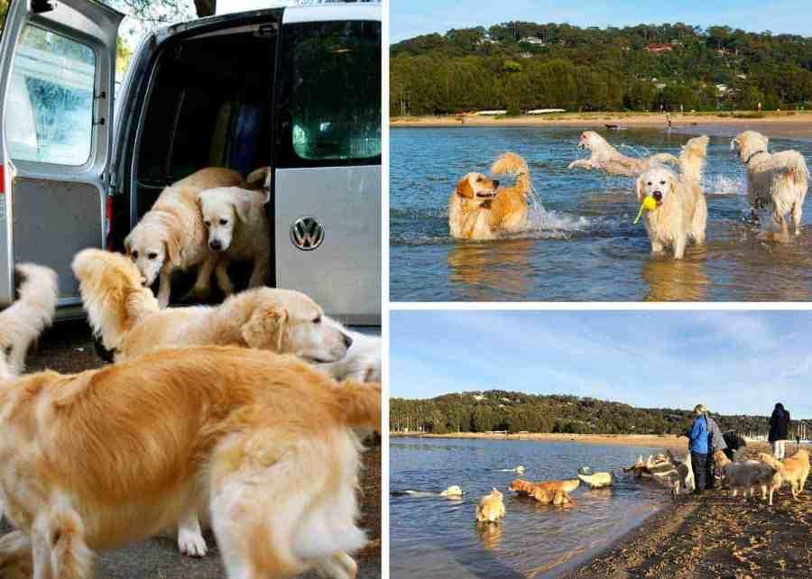 Dozer bayview boarding dogs