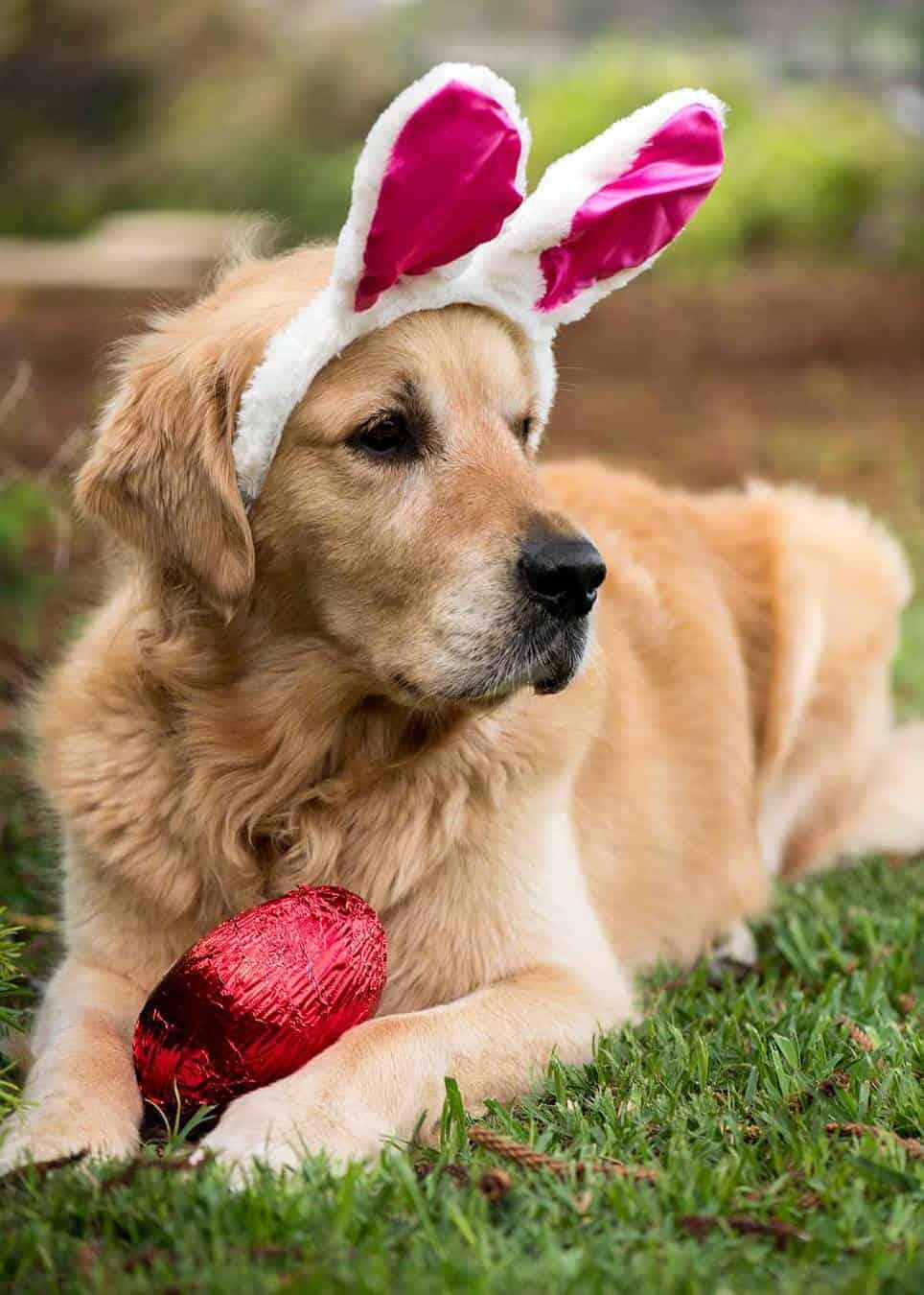 Dozer Easter 2018