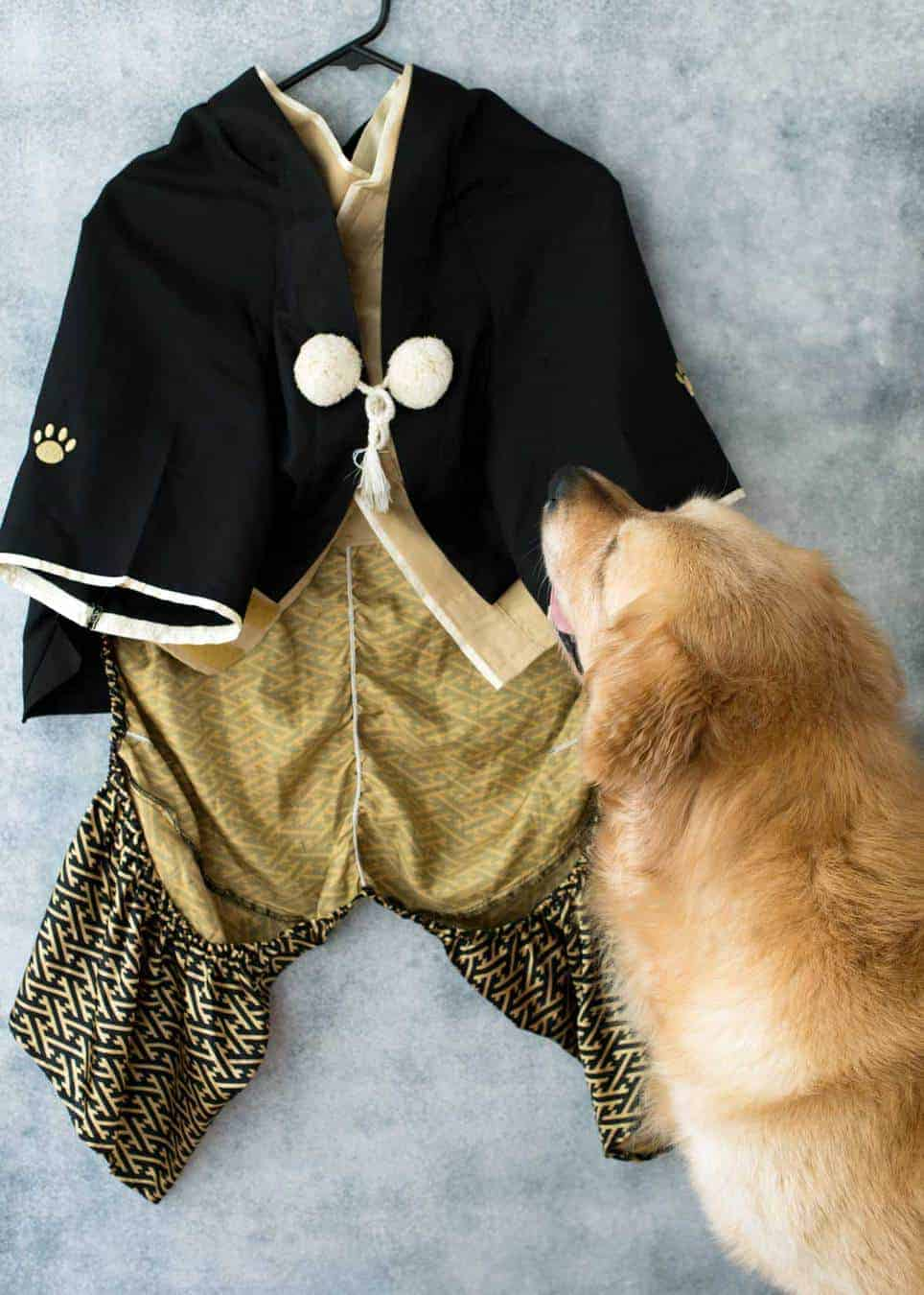 Dozer the golden retriever dog looking fearfully at dog outfit kimono