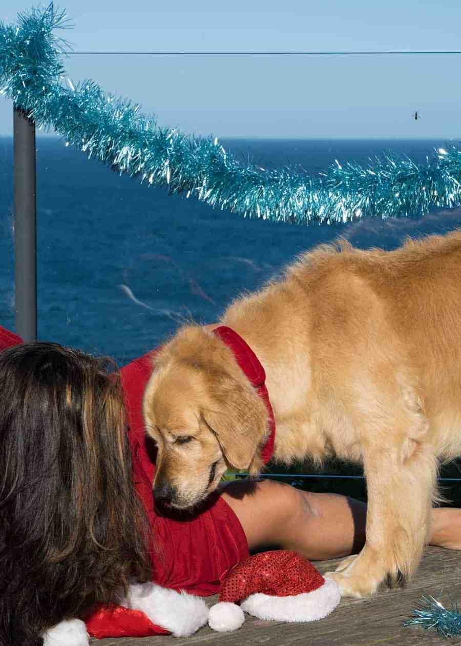 Nagi and Dozer the golden retriever dog_Christmas 2018 bloopers