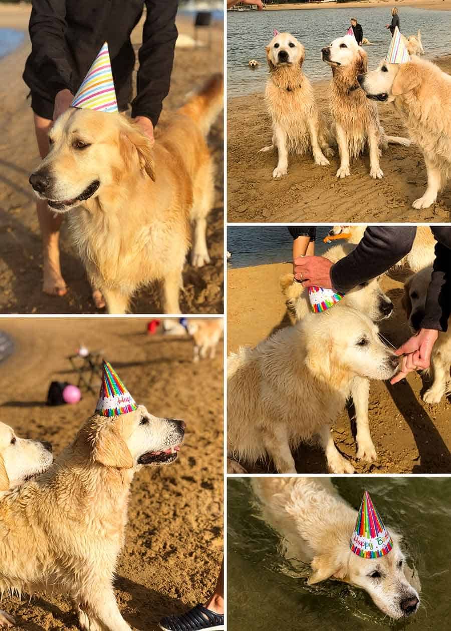 Dozer birthday party-Bayview-April 2019