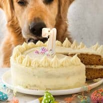 Dozer the golden retriever looking at his Dog cake recipe