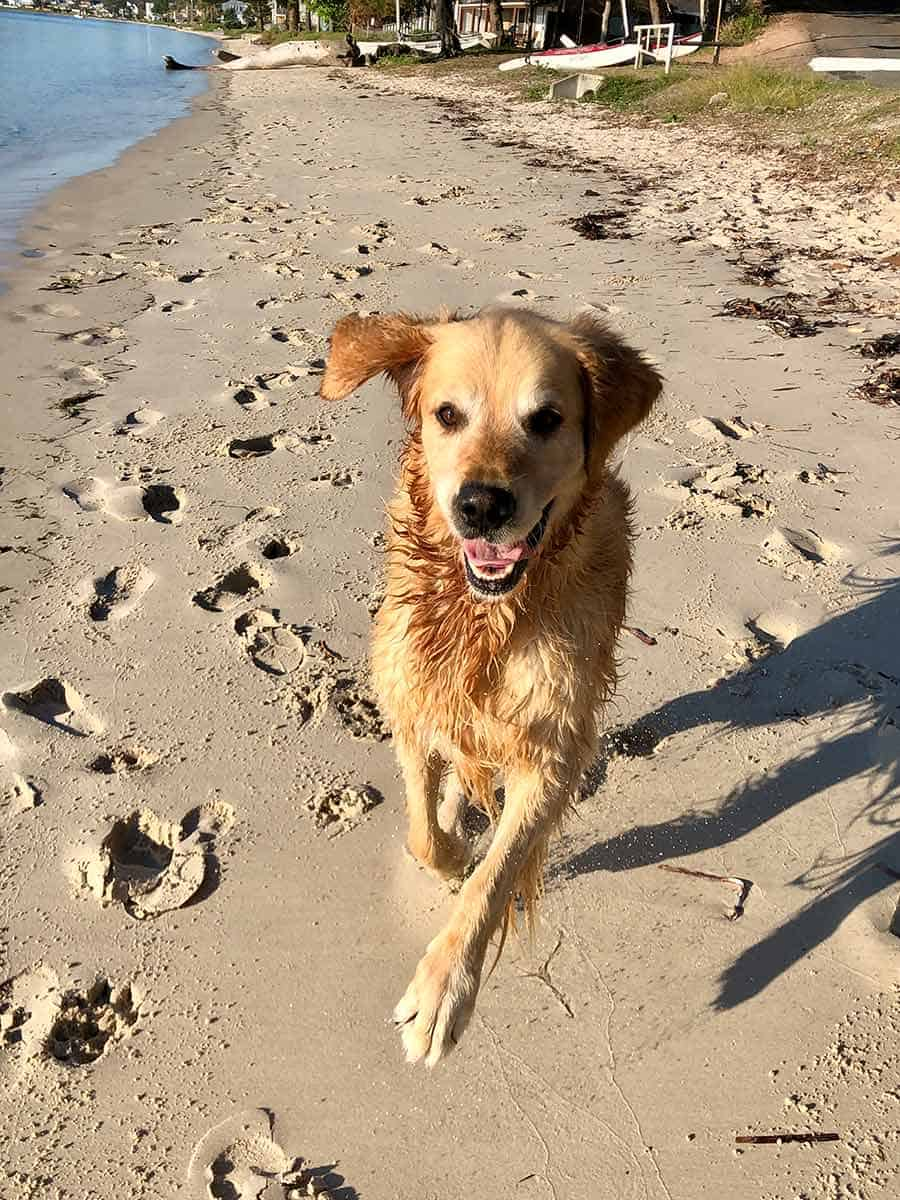 Dozer smiling Port Stephens May 2019