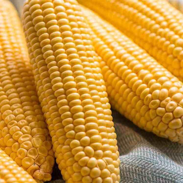 Raw corn on the cob