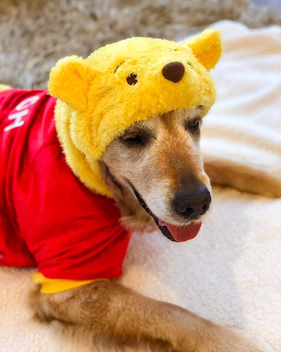 Dozer Winnie the Pooh outfit