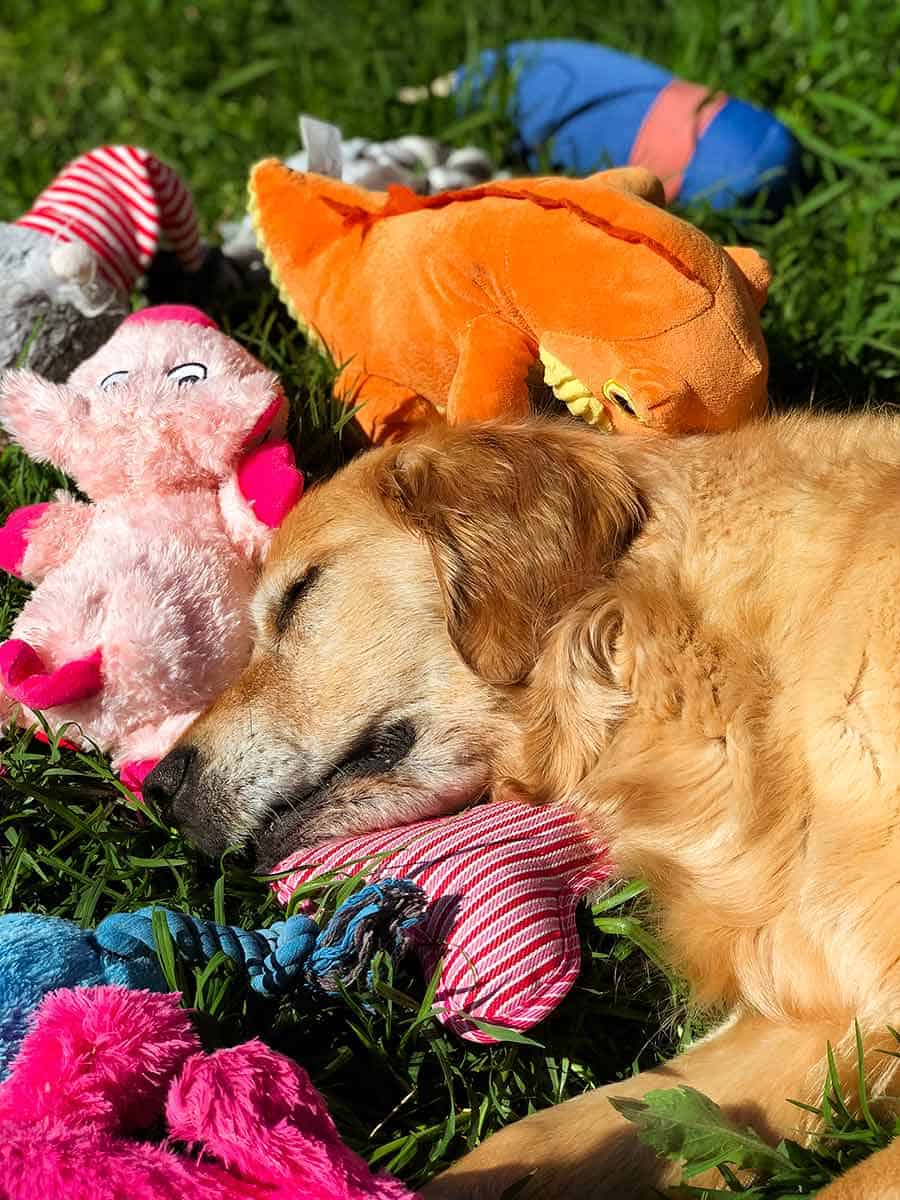 Dozer sleeping surrounded by toys