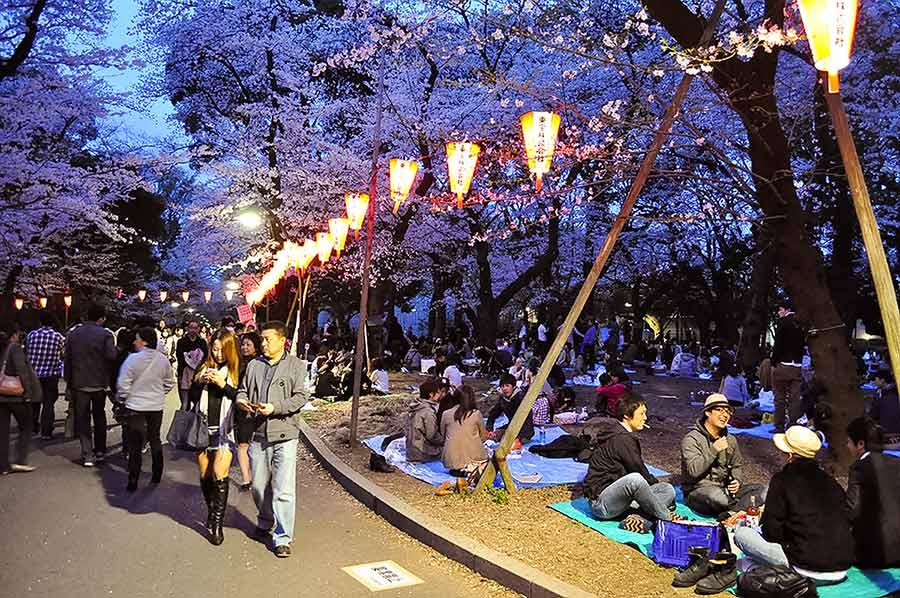 Ueno Park (Ueno Koen) during cherry blossom season at night