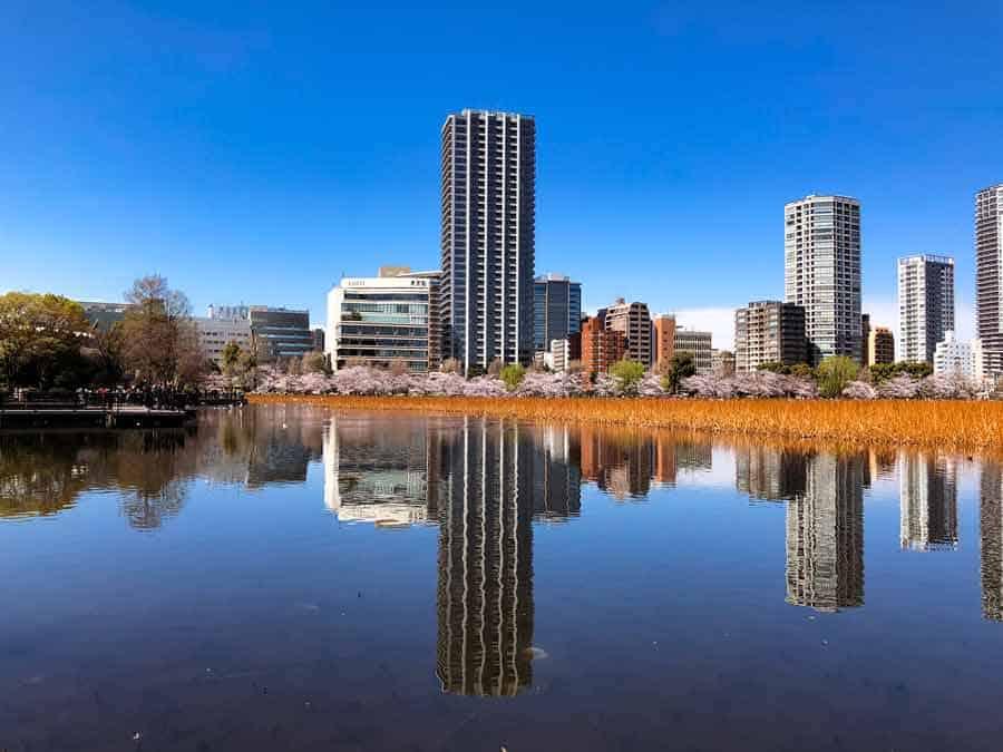 Ueno Shinobazu Pond - Ueno Park