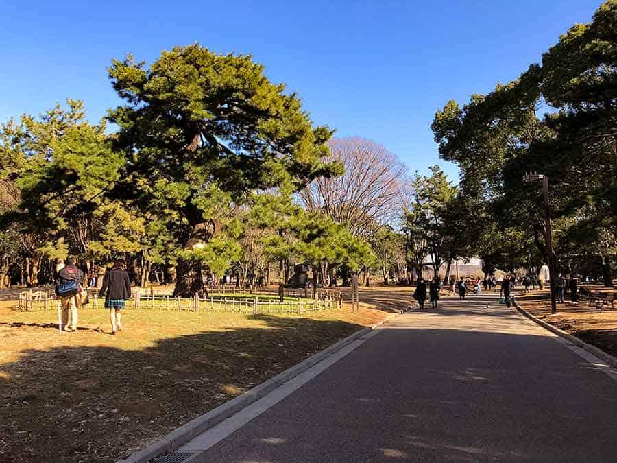 Yoyogi Park Harajuku Tokyo