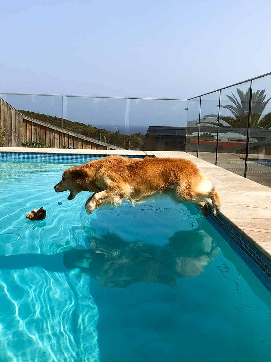Dozer belly flopping into pool
