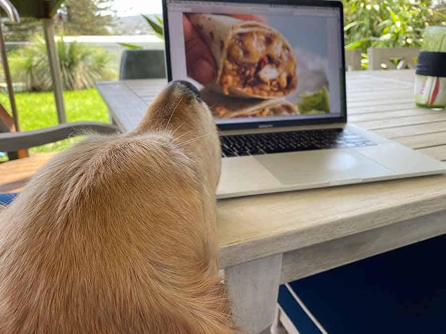 Dozer checking out burrito on screen