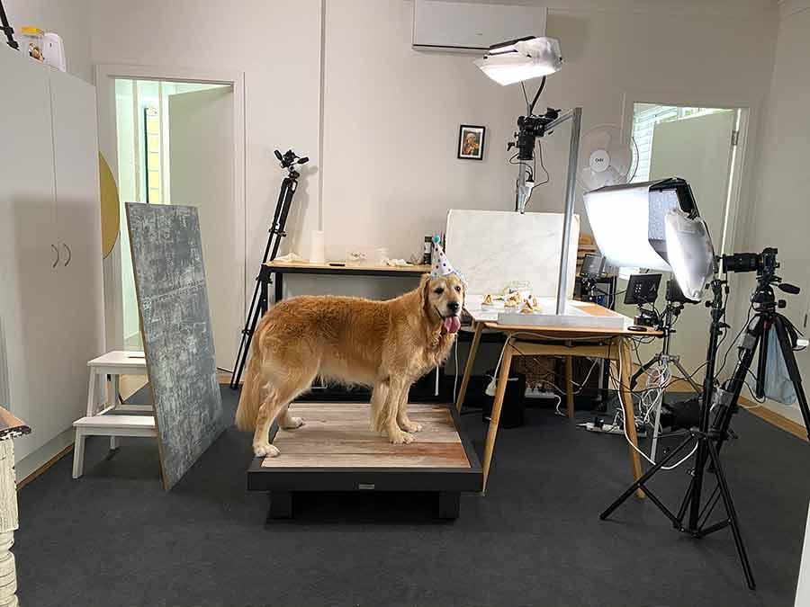 Dozer video shoot for Pupcakes