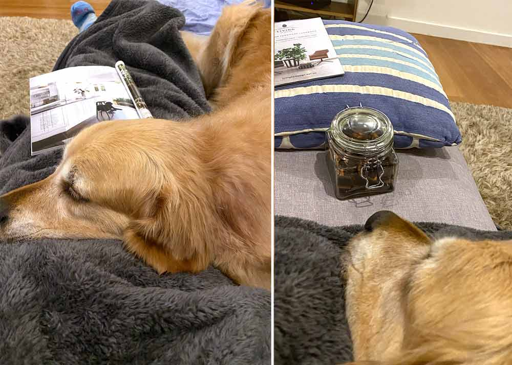 Dozer-keeping-me-warm-on-sofa-treat-jar