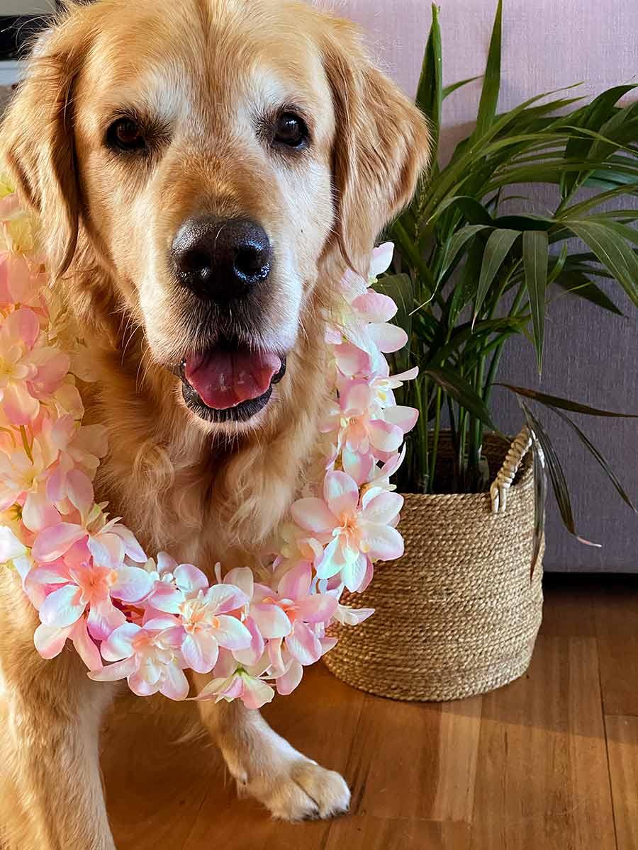Dozer-lei-hawaiian-flower_2
