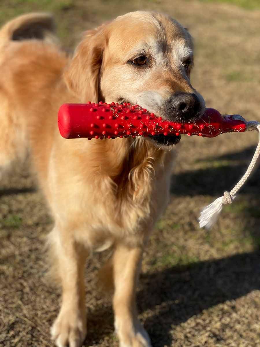 Dozer with toy throwing stick