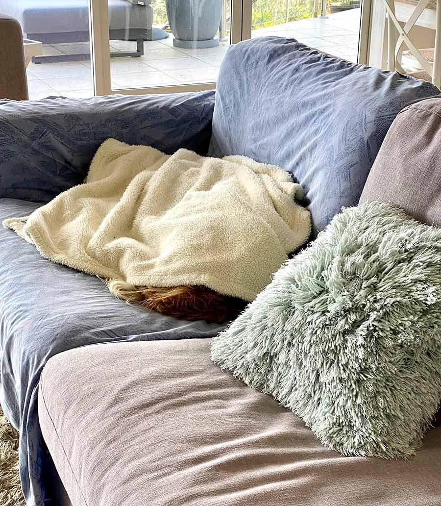 Dozer buried under blanket on sofa