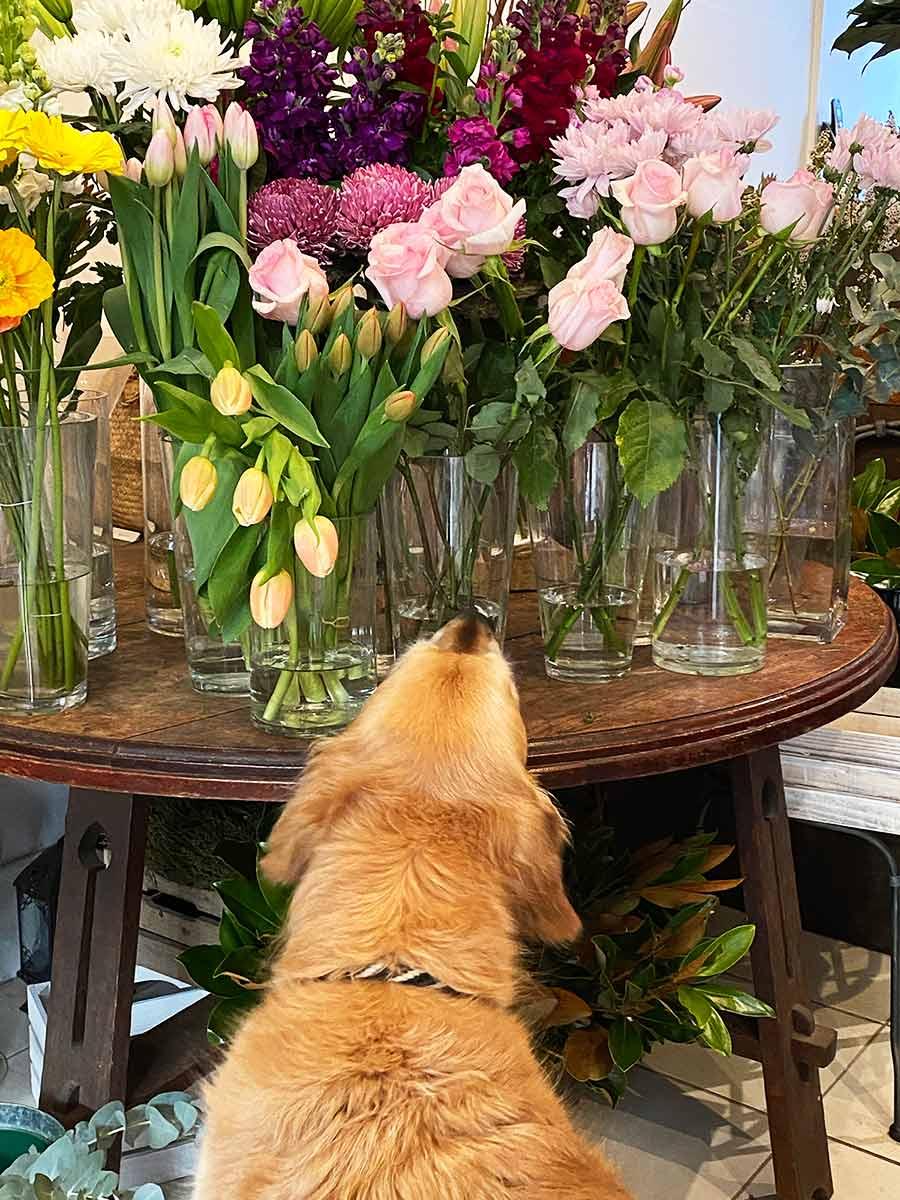Dozer at florist