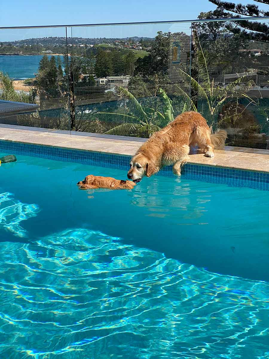Dozer-leaning-into-pool-to-get-toy