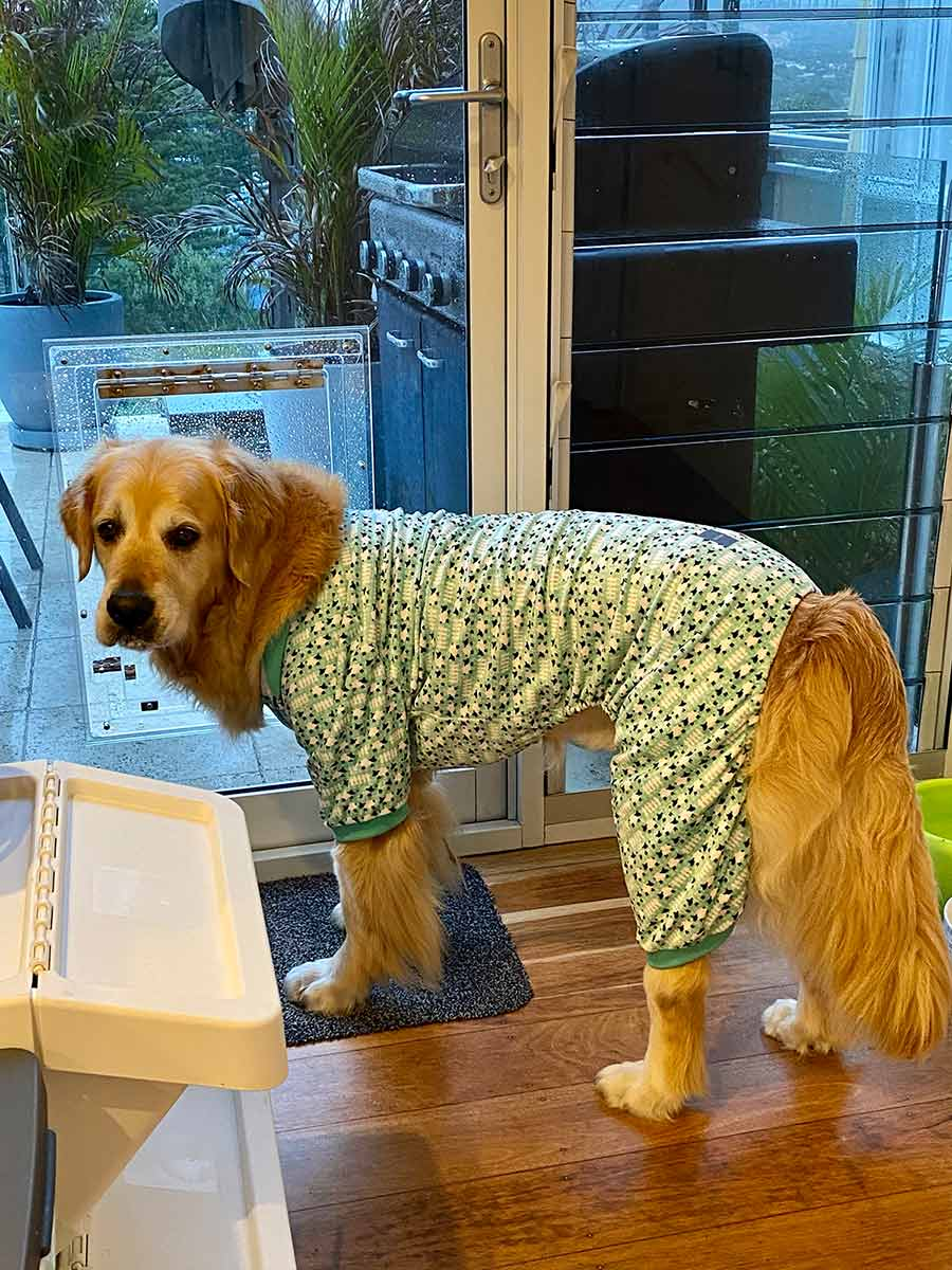 Dozer in counting sheep PJs