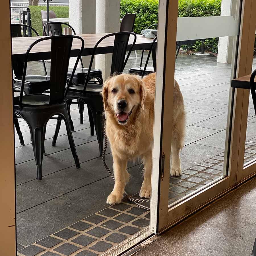 Dozer-outside-cafe