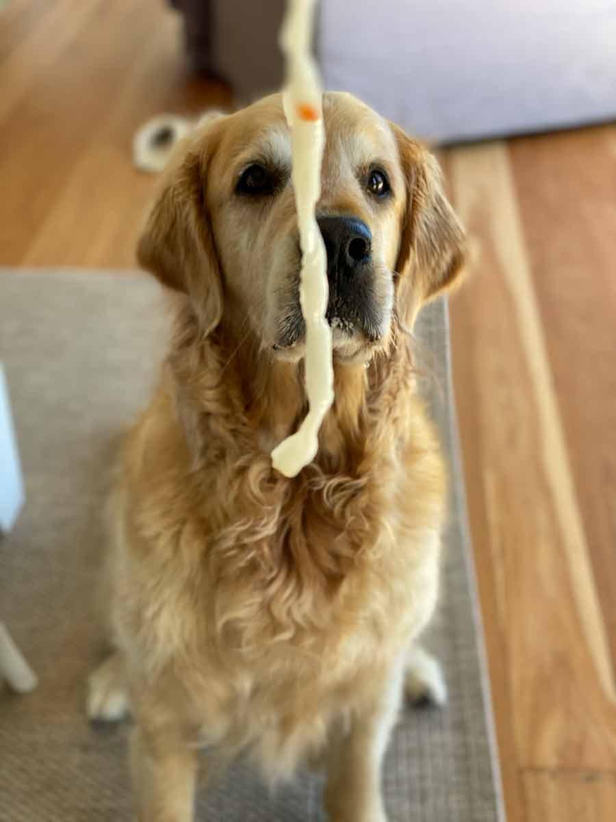 Dozer-teasing-noodles