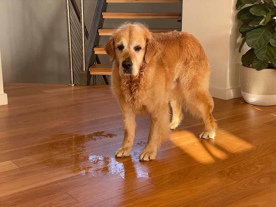Dozer wet patch on floor