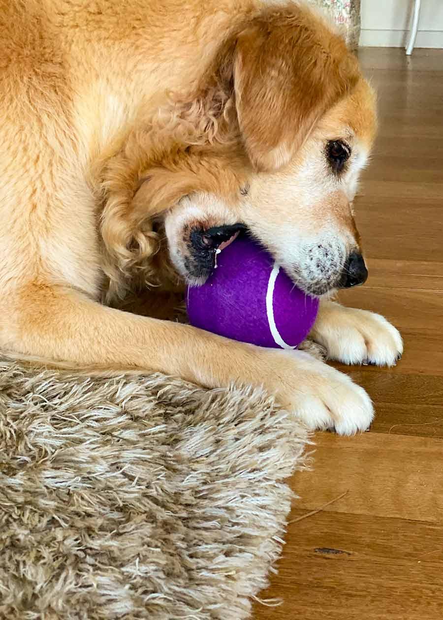 Dozer giant blueberry ball