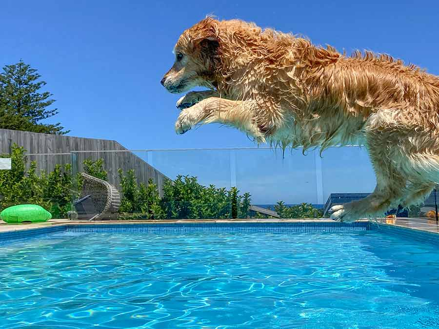 Dozer jumping into pool