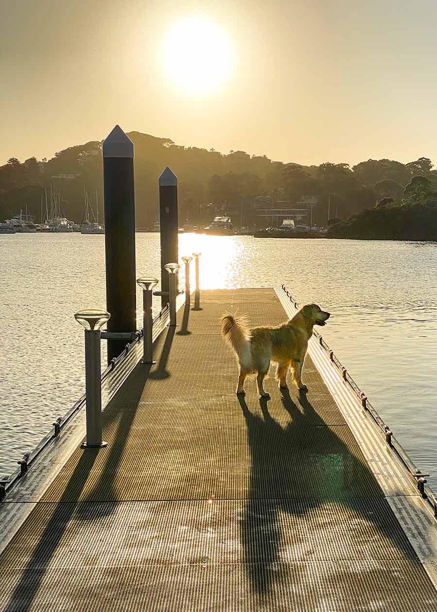 Dozer sunrise jetty Bayview