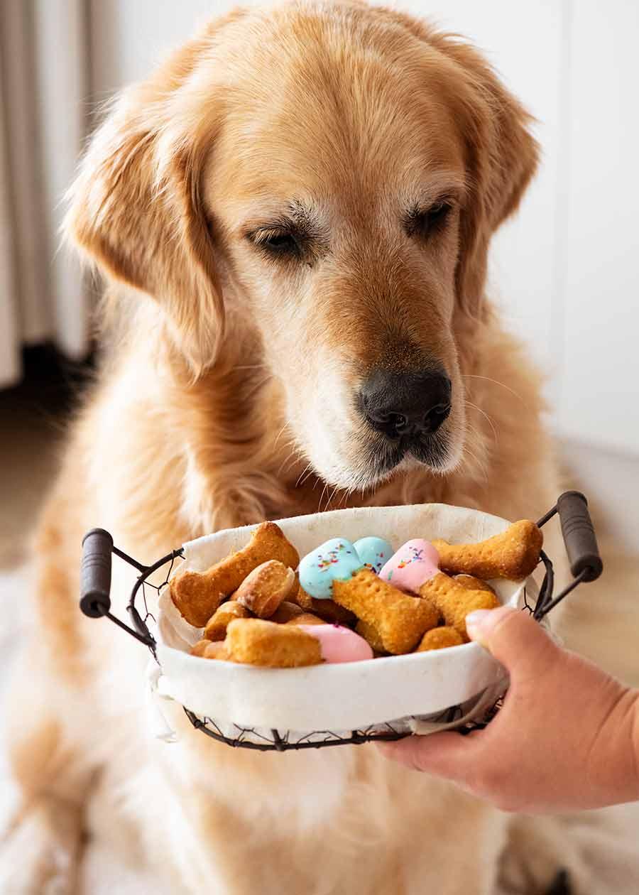 Dozer homemade dog treats