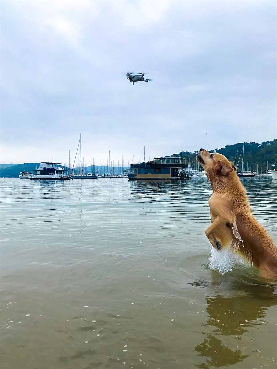 Dozer chasing drone