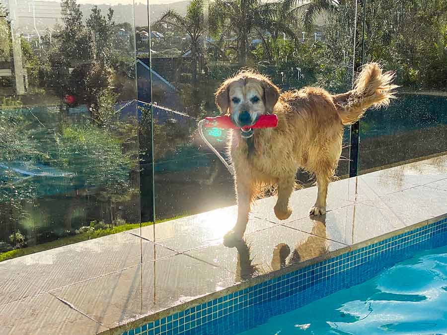 Dozer-trotting-along-side-of-pool