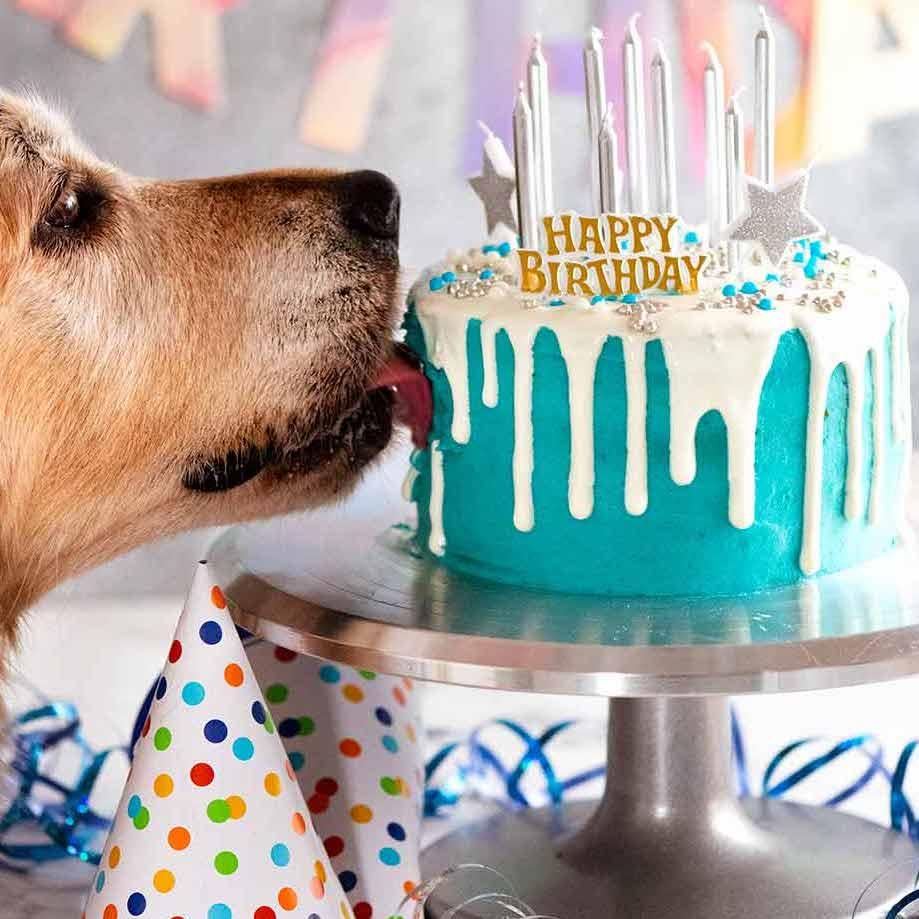 Happy Birthday Dog Pics