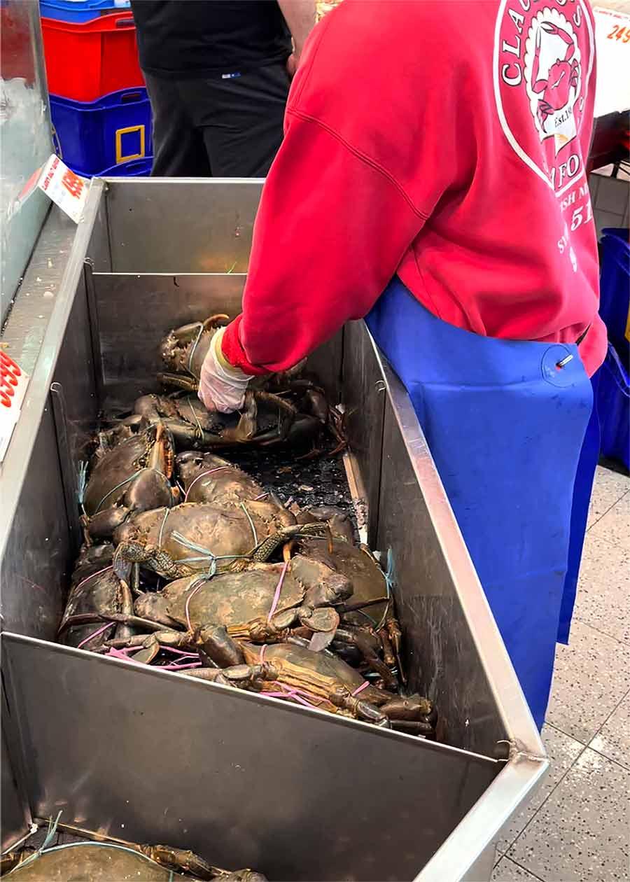Mud Crab at Sydney Fish Markets