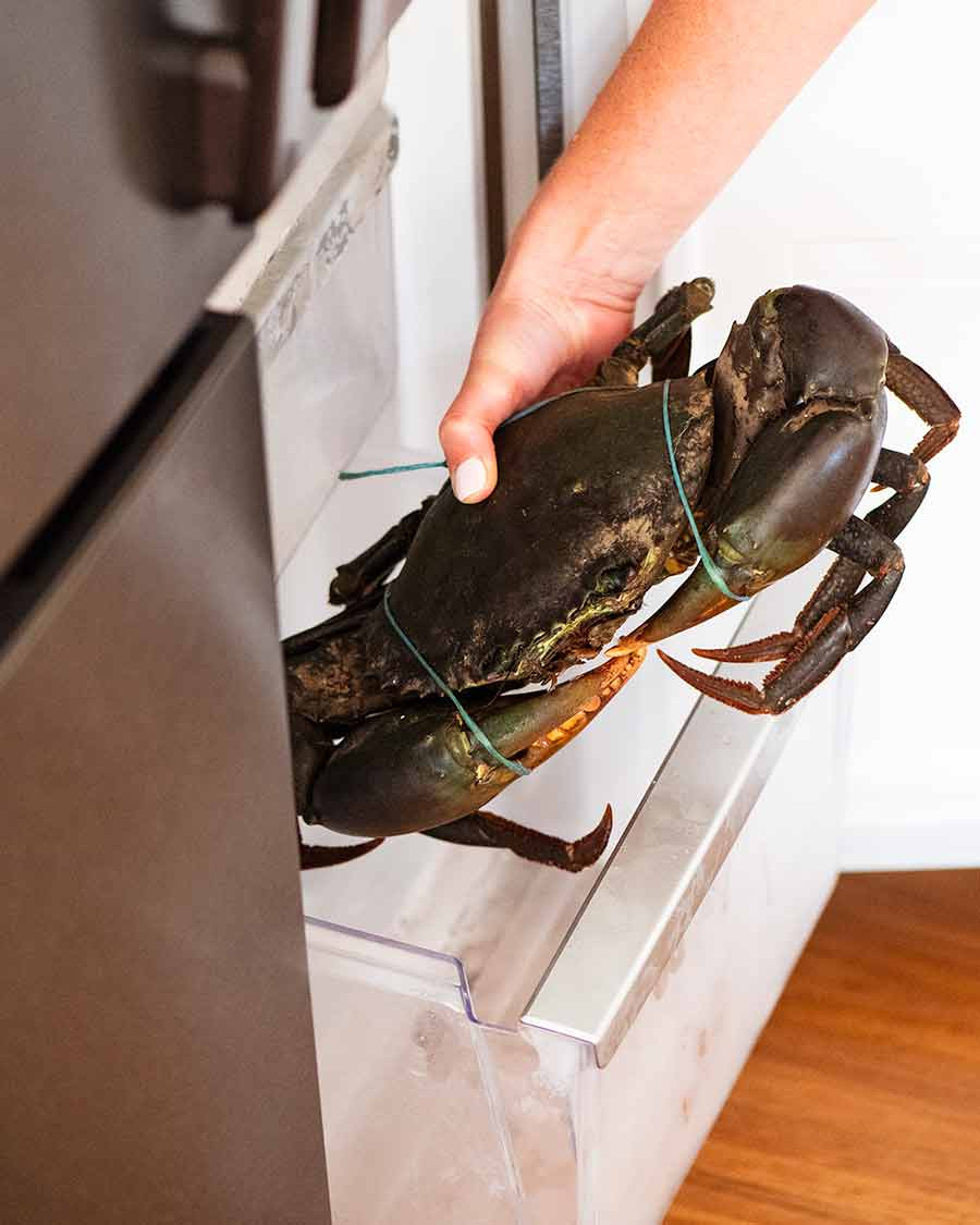 Putting mud crab in freezer to kill it humanely