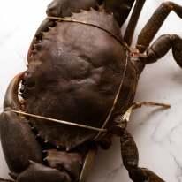 Live whole Mud Crab recipe