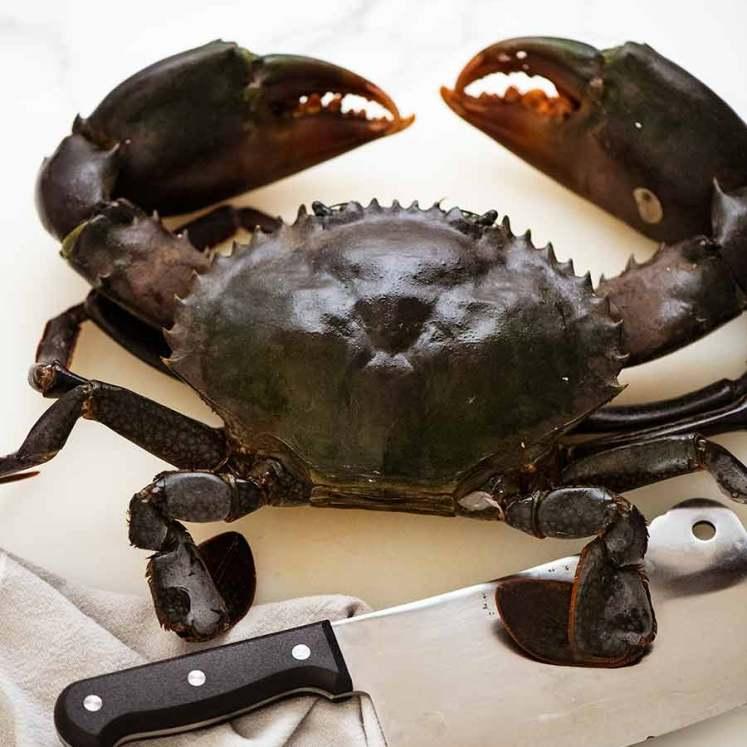 Singapore Chilli Crab - Mud Crab